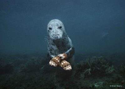 photoinfo.org Brian Skerry 4
